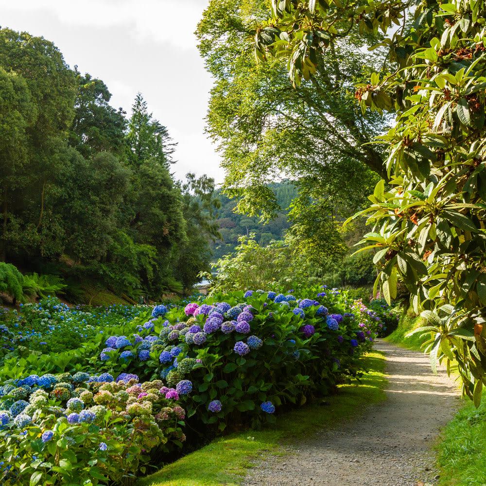 Trebah Gardens in Cornwall